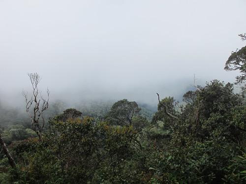 Vihmametsas by elviina