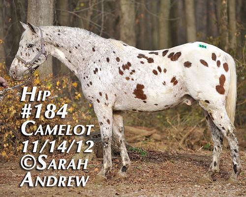 Hip #184