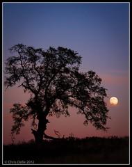 Full Moon and Oak