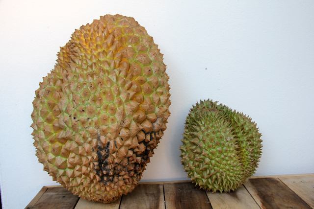 A massive, not so pretty 10 kilo durian!