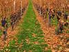 Autumn Grapes by Batikart... off !!!