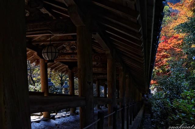 「紅葉の中を…」 長谷寺 - 奈良