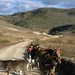 Boys and cattle on the road - Jovenes y ganado eb el camino entre Santa María Tataltepec y Yutanduchi de Guerrero, Región Mixteca, Oaxaca, Mexico por Lon&Queta