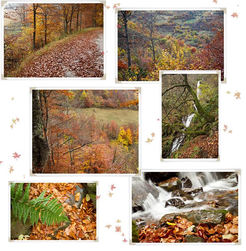 collage3jpg