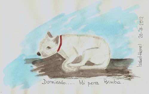 Mi perra Bimba durmiendo