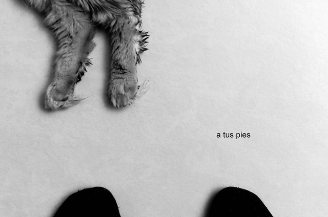 350/366: a tus pies
