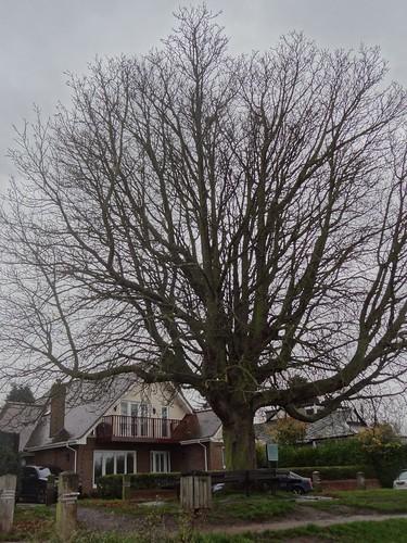 Half Mile Tree