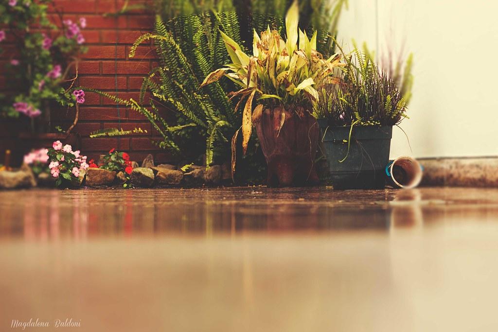 El patio de mi casa es particular, cuando llueve se moja como los demás...