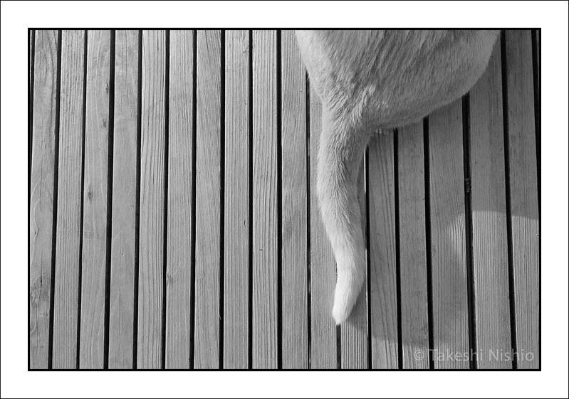 尻尾 / Tail