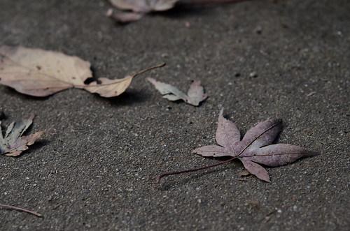 Dropped Leaf