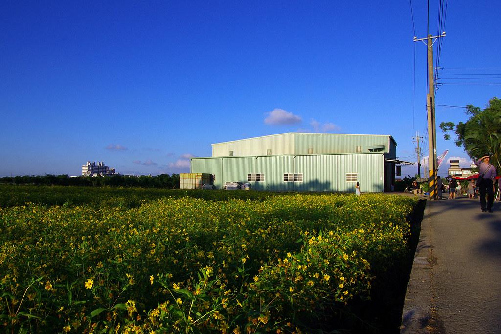 2012橋頭花海之PENTAX拍成了OLYMPUS
