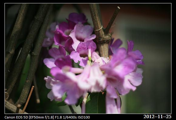 20121125_flower
