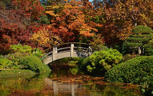"autumn trees paisajes fish fall landscape nikon texas arboles landscaping peces colores koi otoño dfw streams ponds lagunas estanques ictus paisajismo d7000 ""fortworth"" ""japanesegardens"" ""northtexas"" ""nikond7000"" ""texastowns"" ""ictusphotography"" ""ricardoruizdeporras"" ""dallasfortworth"" ""dfwmetroplex"" ""texaslandscape"" ""botanicgardens"" ""fortworthbotanicgardens"" ""fishponds"" ""jardinesjaponeses"" ""jardinesbotánicos"""