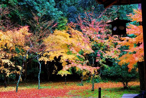 大徳寺高桐院紅葉