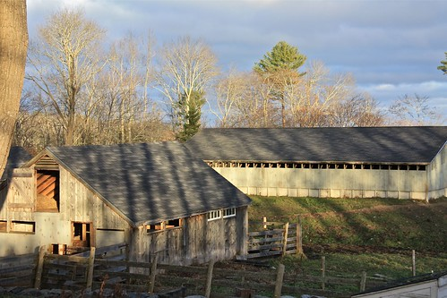 November Light on Aldermere Farm 02