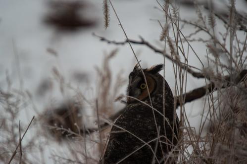 canada pentax wildlife owl saskatchewan assiniboia k20d gmpentaxfan