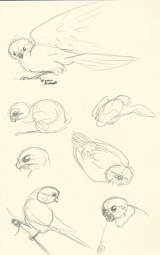 "11.21.12 - ""The Kestrel's Eye"" Sketches"