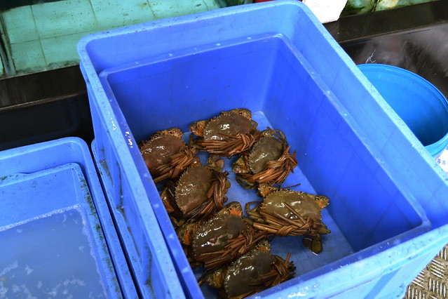 Bucket of chinese mitten crabs
