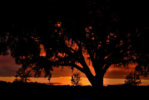 sunset tree clouds glow florida thevillages d8e0437
