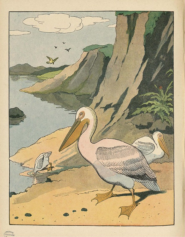 cartoon lithograph of pelican in children's book 1920s