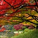 Autumn Colors in Tokyo[Explored] by magicflute002