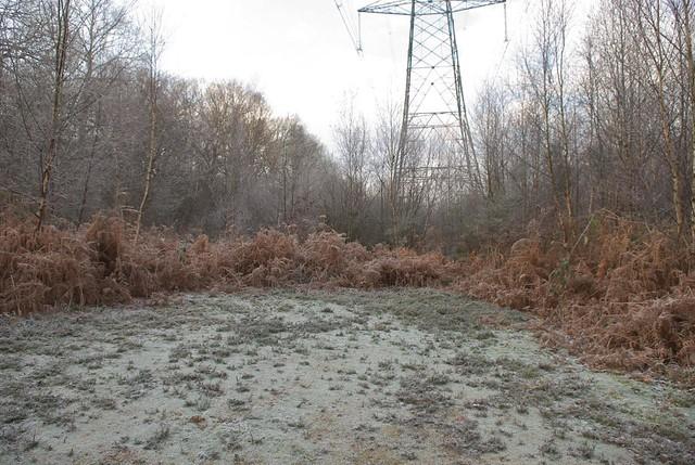 DSC_5350 Frosty woodland