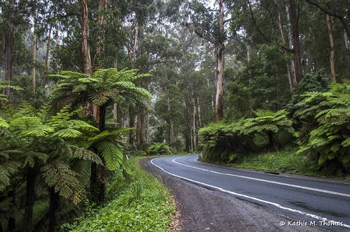 Monbulk Road