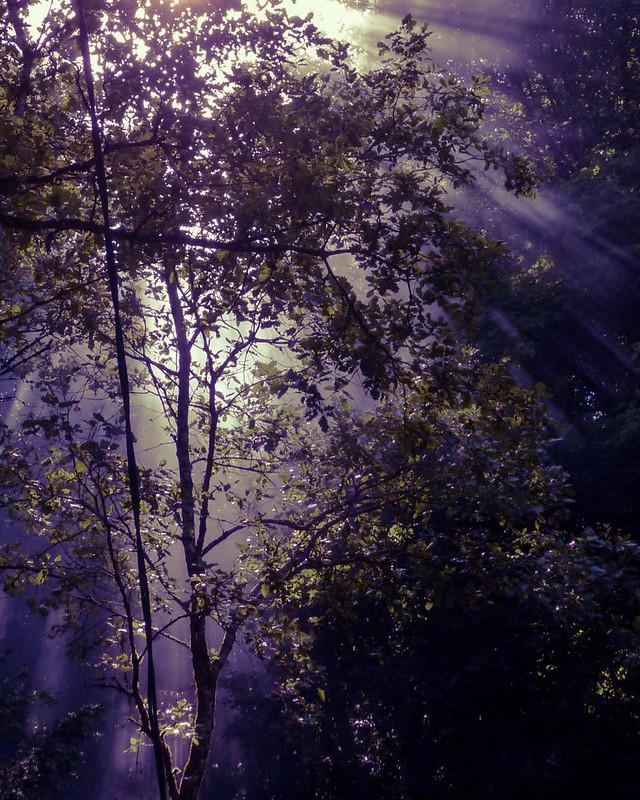 Lumière d'ambiance en forêt... 8272577871_76f111b506_c