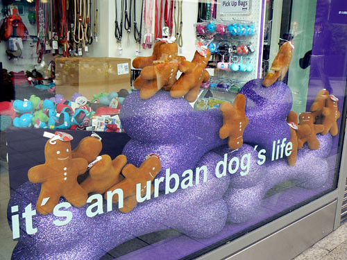 it's an urban dog's life.jpg