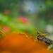 Ninfa de langosta / Locust nymph por s7r4n9e1e7