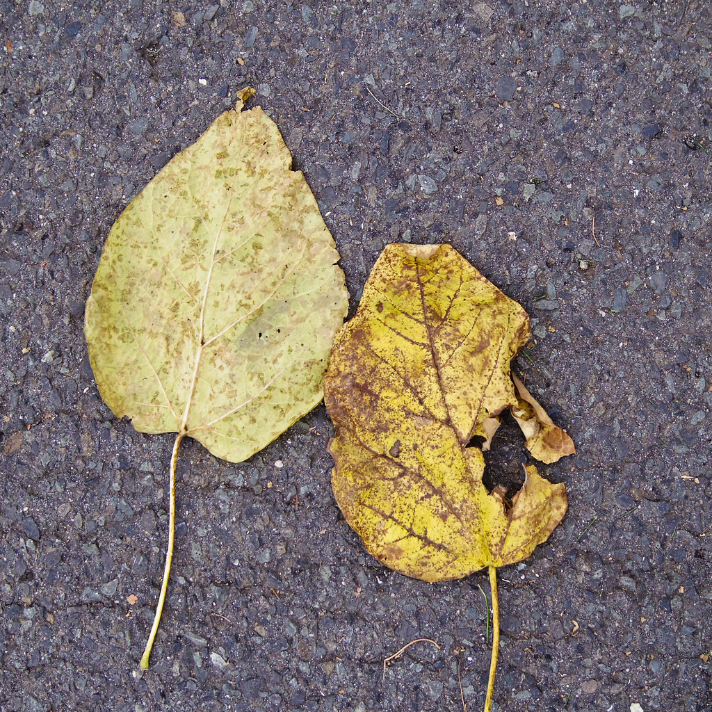 Leafs on the street
