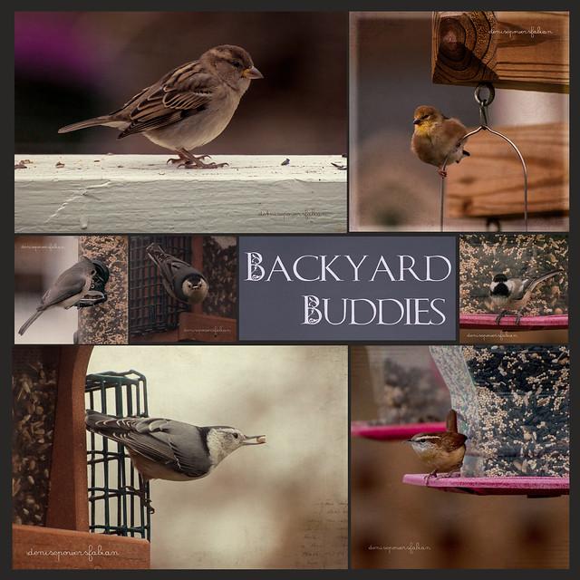 Backyard Buddies 8/365