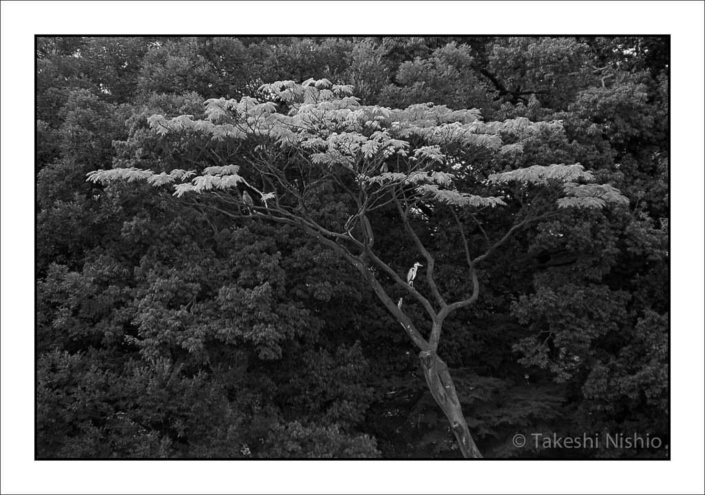 樹上の鳥たち / Birds in tree