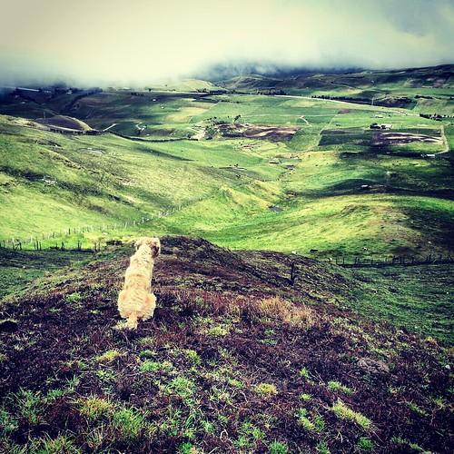 ecuador sierra perro andes campo cultivos montañas cañar flickrandroidapp:filter=none buheran