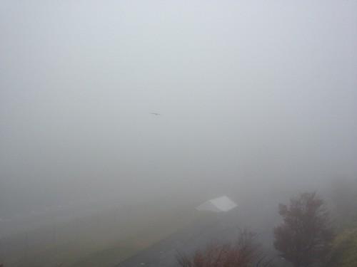 オートポリスは霧の中