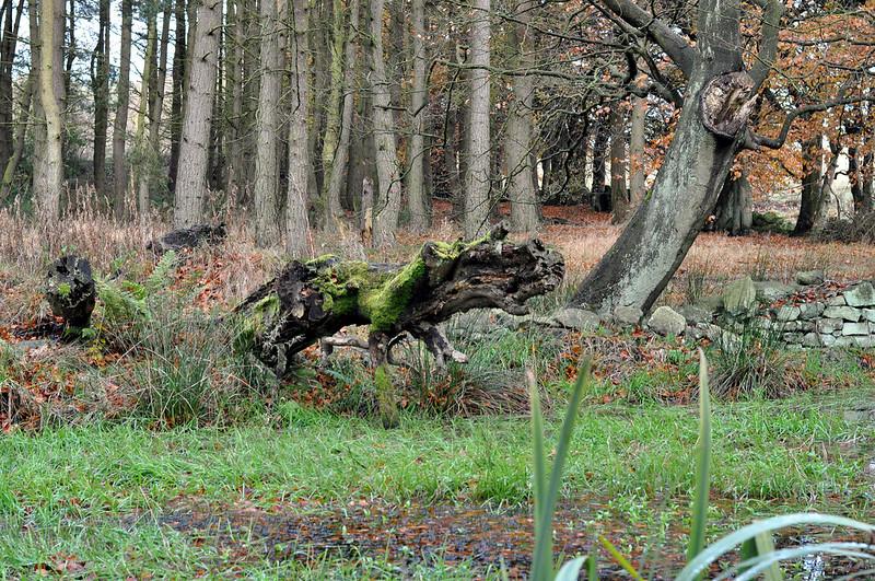 darwin forest 39