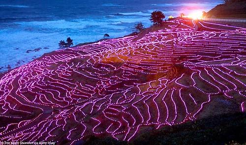 Японские рисовые поля мерцают в темноте благодаря 20 тысячам LED-ламп (Видео)