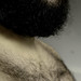 Gratuitous Beard Photo - From the Side by Kealoha1981