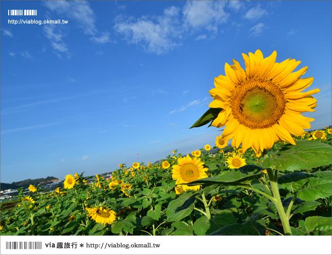 【新社花海2012】2012新社花海節活動介紹及交通資訊8-13