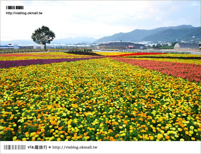 【新社花海2012】2012新社花海節活動介紹及交通資訊8-2