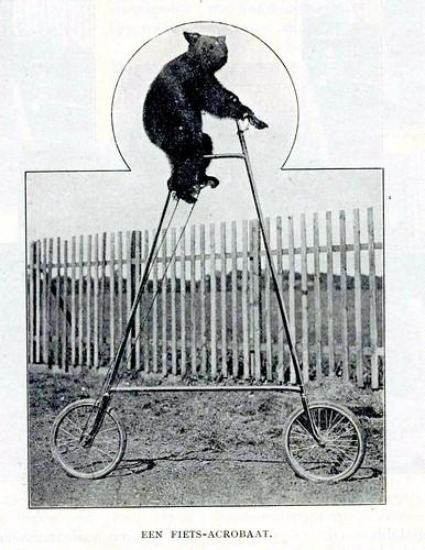 circus Hagenbeck  fietsaccrobaat  1913
