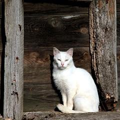 Le chat de Béthonsart