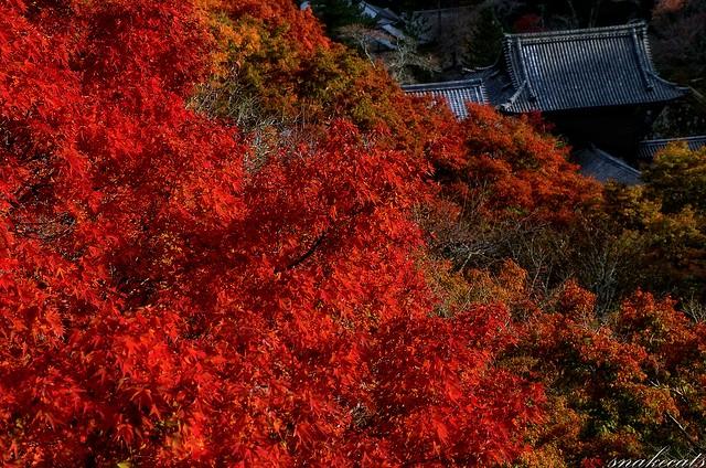 「紅葉迫る」 長谷寺 - 奈良