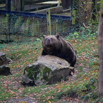 Llandudno trip and Welsh Mountain Zoo