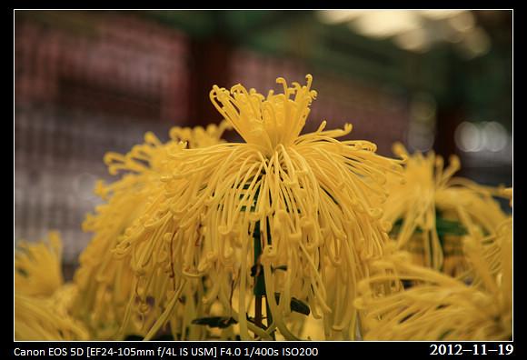 20121119_Flower23
