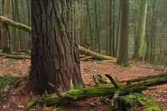 Evergreen Trail (2)