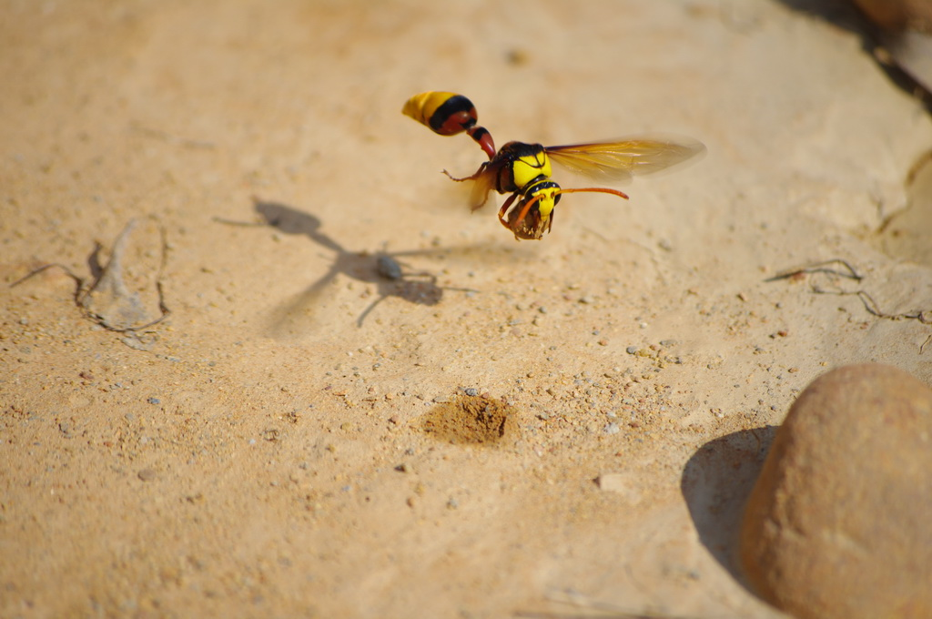 巧遇蜂<重新傳送>