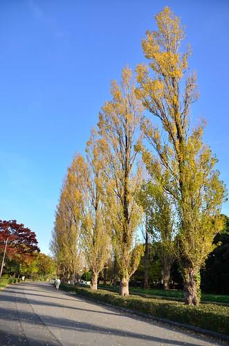 20121125_水元公園