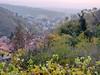 dalle viti all'orizzonte