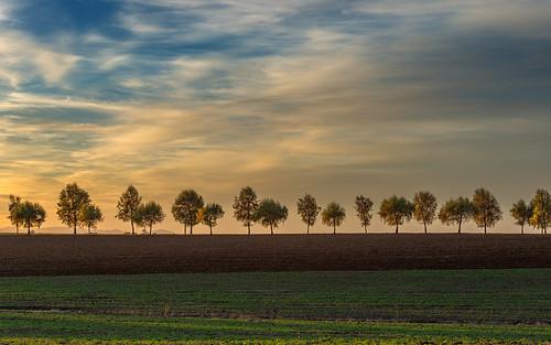 autumn trees sunset clouds oregon evening nikon october day cloudy line hillsboro 2012 linear d800 alleesky
